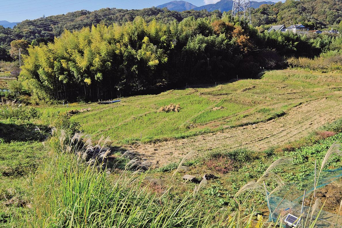 今は観光スポットでもある名古木の棚田。ちなみに「棚田百選」では選出外。耕作されずに荒れていたが、2003年からNPO法人「自然塾丹沢ドン会」が復元に取り組んでいる。