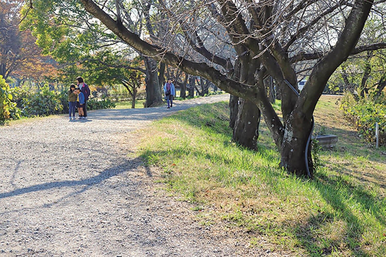丸墓山古墳の足元に残る石田堤の痕跡。石田堤は石田三成が忍城を水攻めした際に築いた堤。