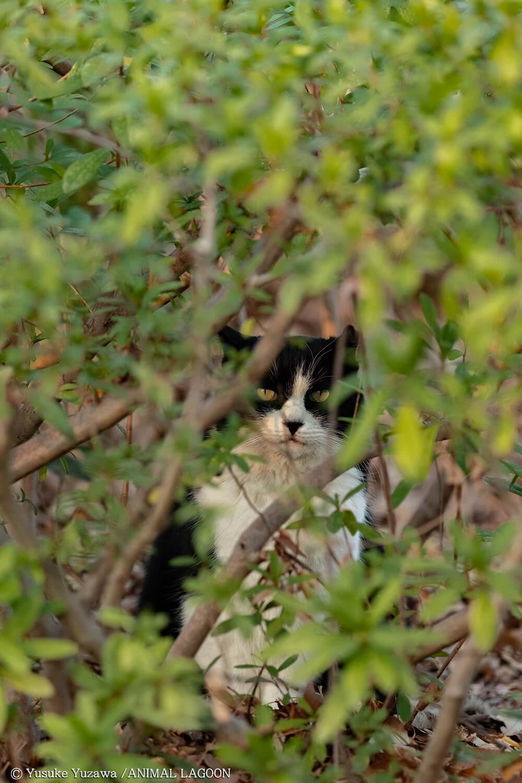 茂みの中に潜んでいました。