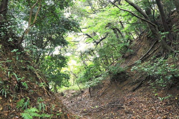 金ヶ崎城・天筒山城(かねがさきじょう・てづつやまじょう)