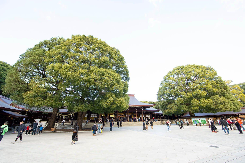 本殿前にある夫婦楠(左)。2本の 木がまるで1本のように見える。