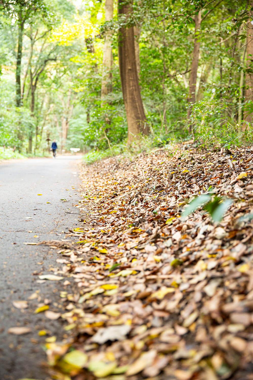 境内の植物はもちろん落ち葉も持ち出し禁止。この森だけで循環し命がつながれていく。