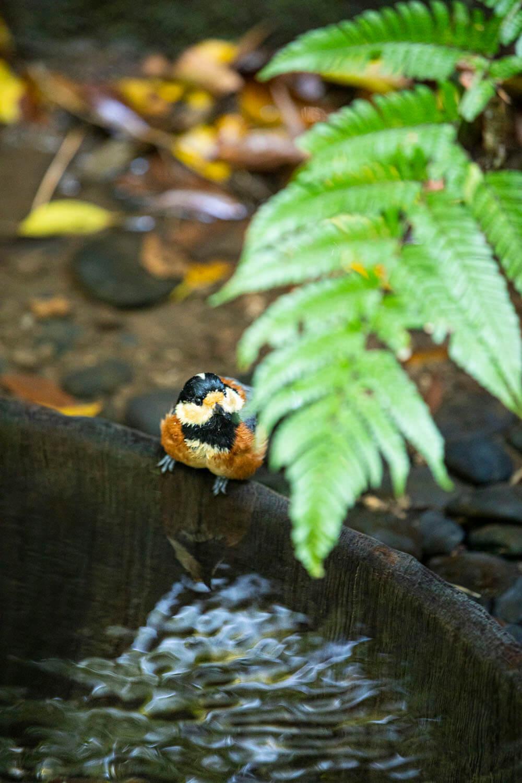 こんこんと水が湧き出る清正井。御苑内にある人気スポットで人通りが絶えないが、ひっそり野鳥がいることも。