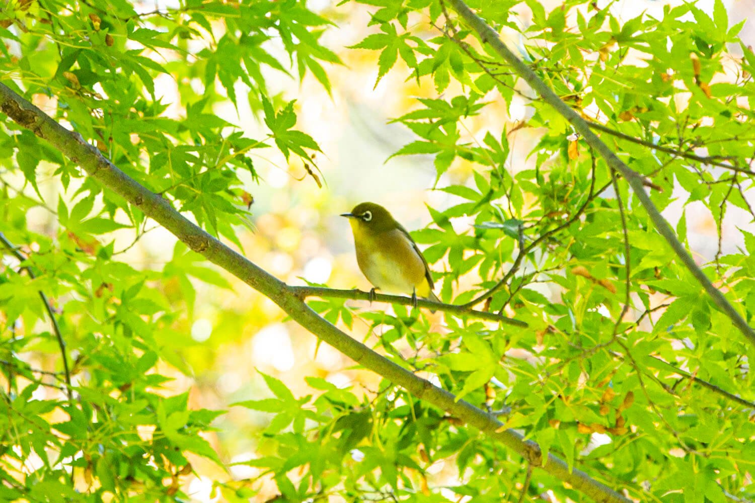 あちこちに野鳥が飛び交う。澄んだ鳴き声がにぎやかだ。
