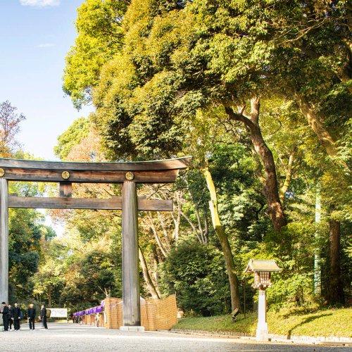 """100年の森、明治神宮を歩く~永遠に更新される""""人工""""の森~"""