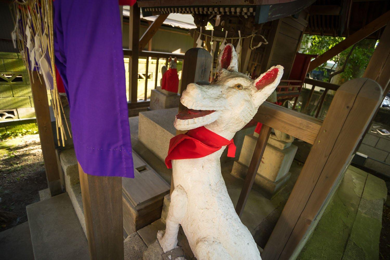 境内の稲荷社の白狐。