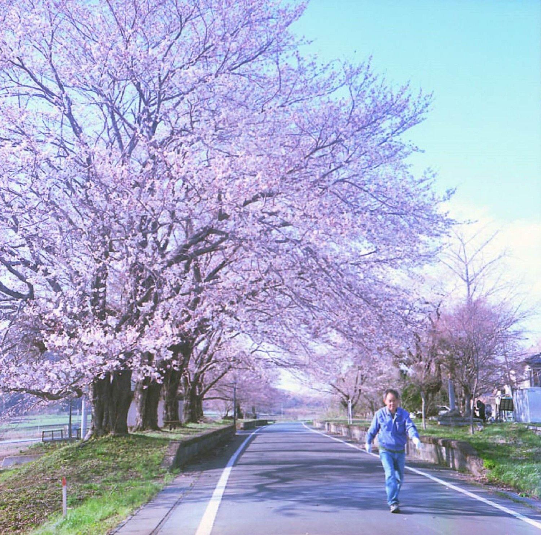 たしか2008年ごろに訪れた雨引駅跡。満開の桜が美しく、しばし息を飲んだ。6x6フォーマットカメラにて撮影。(カラーネガスキャン)