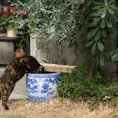野良猫さんぽ・どう撮るか? ~エキスパート直伝! 野良猫らしいしぐさの撮り方編~