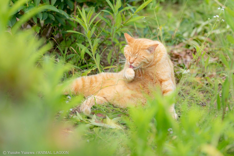 野良猫撮影 (9)
