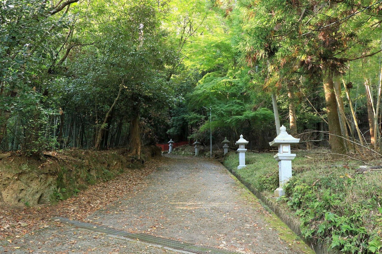 宇佐八幡宮への参道。頭上も両脇も緑に覆われている。