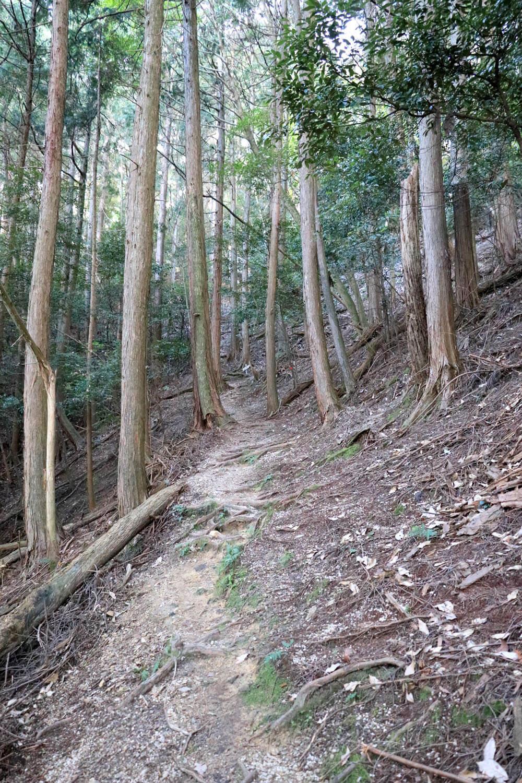 急斜面に伸びる幅の狭い山道。