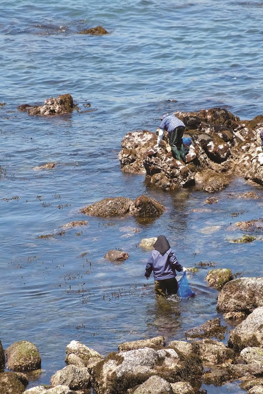 黒崎の鼻の北側の磯では地元のおばさんたちが何やら採っている。岩についた岩海苔だろうか。