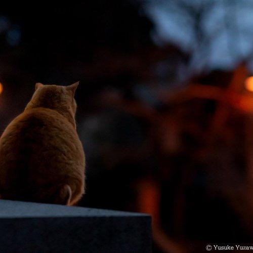 野良猫さんぽ・どう撮るか? ~エキスパート直伝! 撮影のコツ 夜の野良猫編~