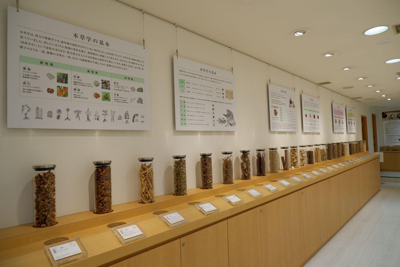 生薬・和漢植物の現物見本が並ぶ。