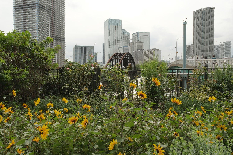 晴海橋梁の豊洲側は橋梁の端でレールが途切れている。傍には花壇が整備されていた。