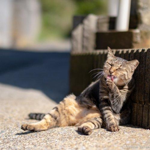 【看板猫がいるお店】城ヶ島『かねあ』のミーコちゃんとハナコさん