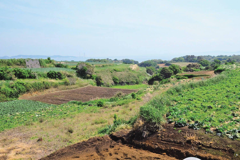 松輪バス停近くから見た畑の風景。これこそ三浦丘陵の風景だ。遠くに房総半島が見える。