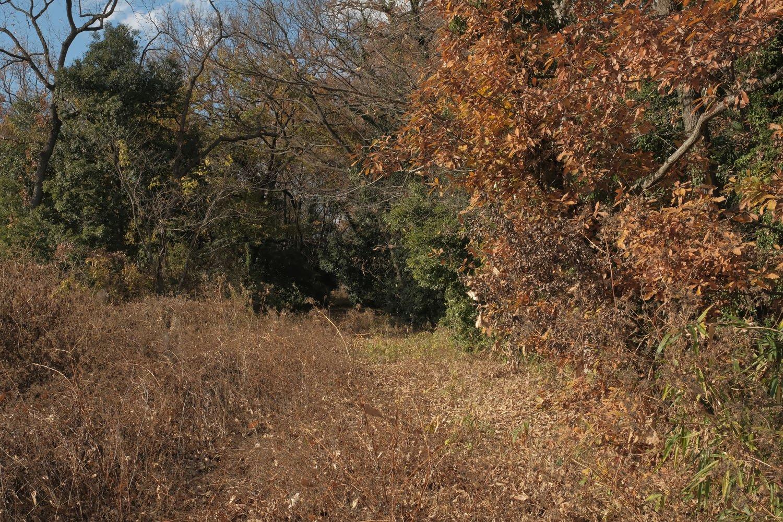 草が伸びていて、レールが見えない。ただの小道のようだ。