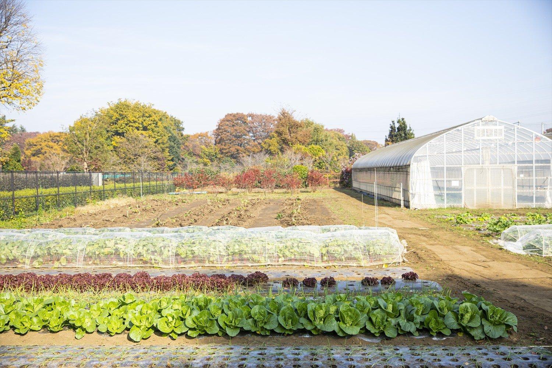 ミモザの木が目印。大根やキャベツ、ハヤトウリ、柚子などが100円均一で。季節の切り花も並ぶ。