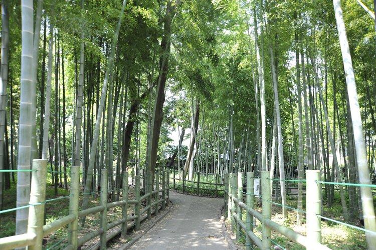 すずめのお宿緑地公園(すずめのおやどりょくちこうえん)