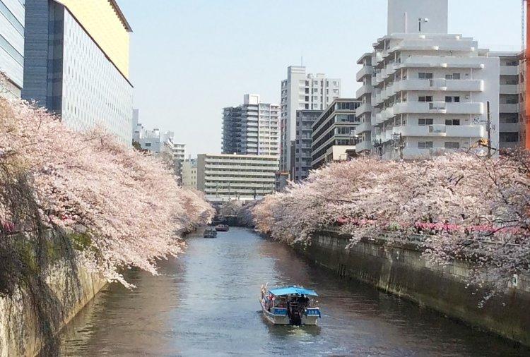 目黒川(めぐろがわ)