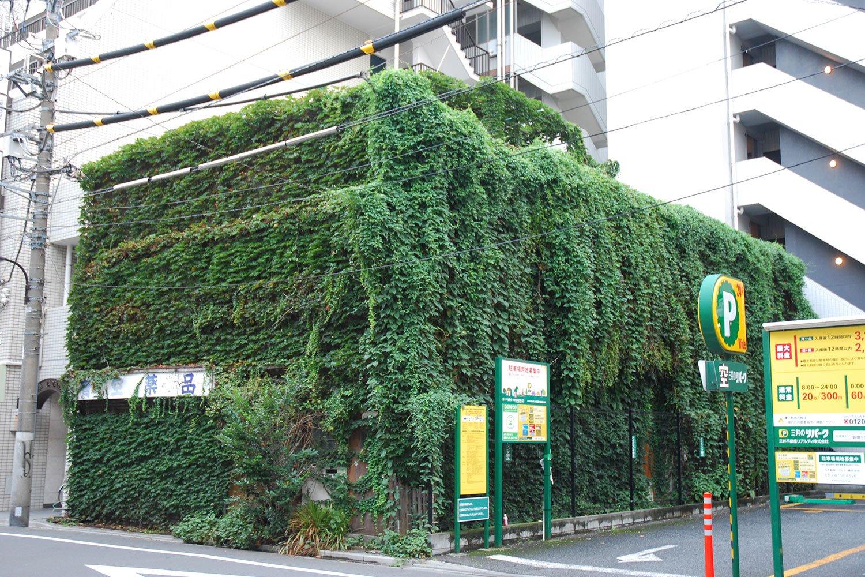 建物全体がツタで覆われた「植物ハウス」。植物の生命力がビルばかりの街に異世界を生み出す。写真提供:村田さん