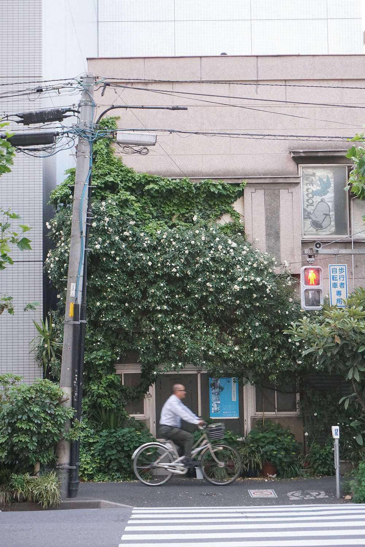 日本を代表する都市の東京。ビルばかりのエリアもあるが、よくよく見れば街なかには緑があふれかえっていたりする。