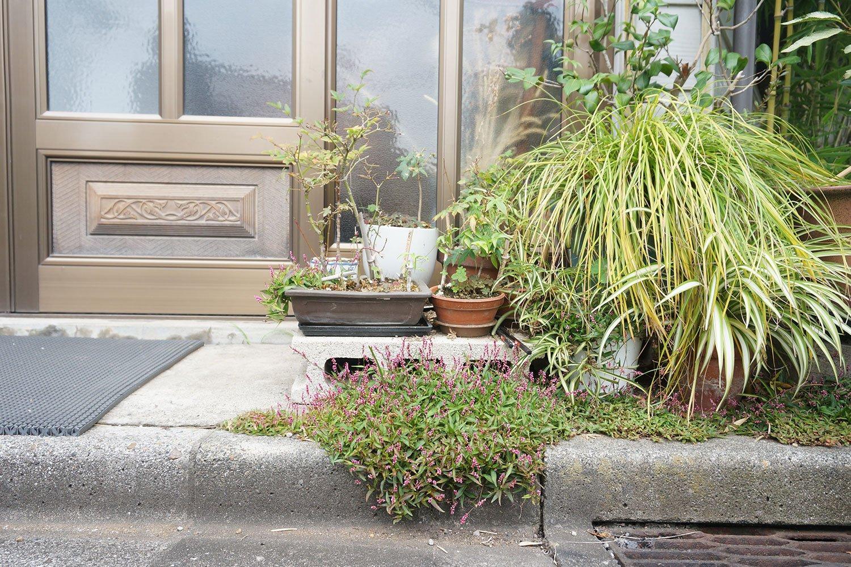 こちらも押上で見かけた路上園芸。「上の鉢の植物が路上に逃げ出したのか、路上の植物が上の鉢に『おじゃまします』と入ったのか……」と村田さんは興味深げに観察していた。