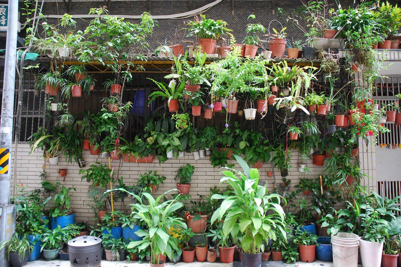 屋根の上にも軒下にも鉢植えがぎっしり並ぶ、台湾の家。写真提供=村田さん。