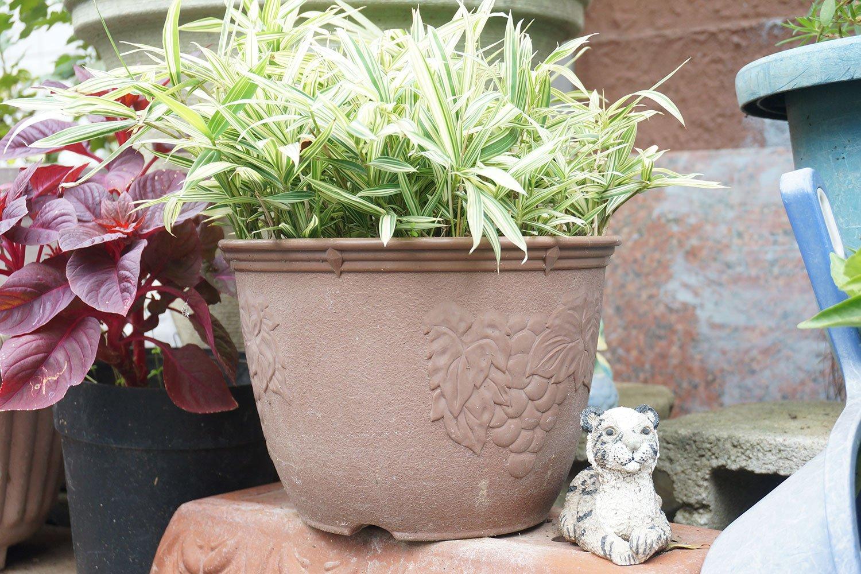 こちらも押上で見た園芸。小さなトラの置物がそっと添えられているあたりに、住民の方の遊び心がはみだしている。