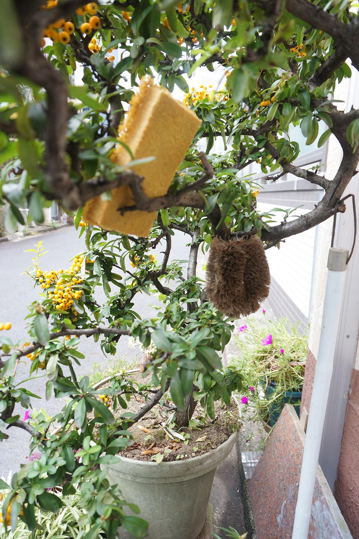 こちらはタワシやスポンジが引っ掛けられたピラカンサの植木鉢。「生活感があっていいですね……」と村田さん。