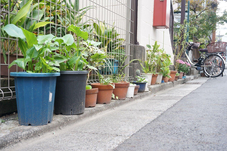 家の敷地をはみ出て、公道スレスレにまで迫る押上の路上園芸。カッチリと区画整理がされた街では見られない光景だ。