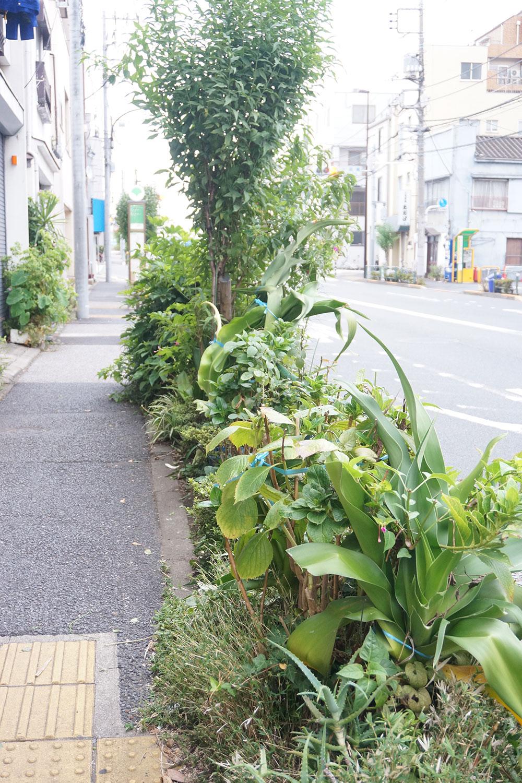 あまりに多彩な植物が並ぶ公道脇の植栽。誰か個人が持ち込んだ植物が紛れ込んでいそう!