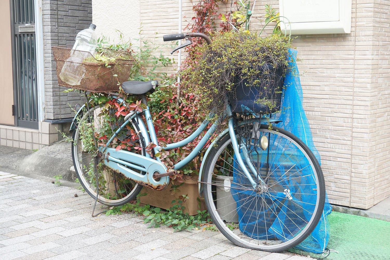前後のカゴに植物が置かれ、全体が緑に包まれつつある自転車。こちらも『たのしい路上園芸観察』に登場した場所だったが、取材時も健在だった。
