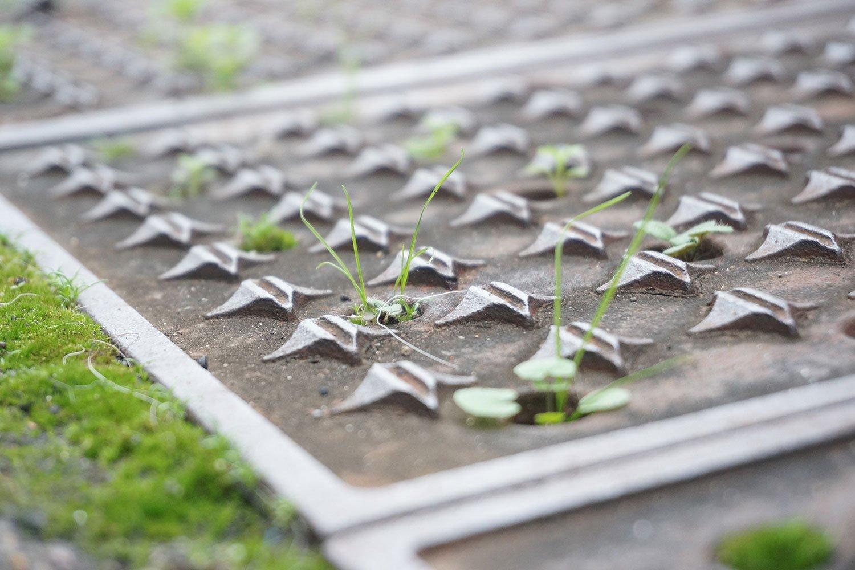 小さな穴からニョロニョロと伸びる植物たち。確かに切り取って見るとカワイイ!