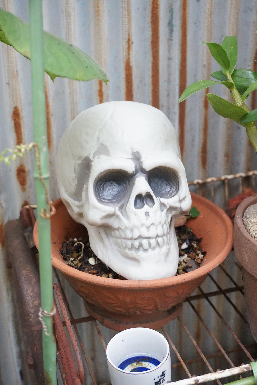 こんな大きな頭蓋骨も。「いいですね! うちの近所の家もハロウィンの時期にはガイコツが置かれてます」と村田さん。