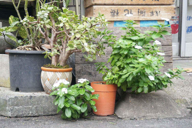 置かれている植物や鉢の配置は可愛らしい。
