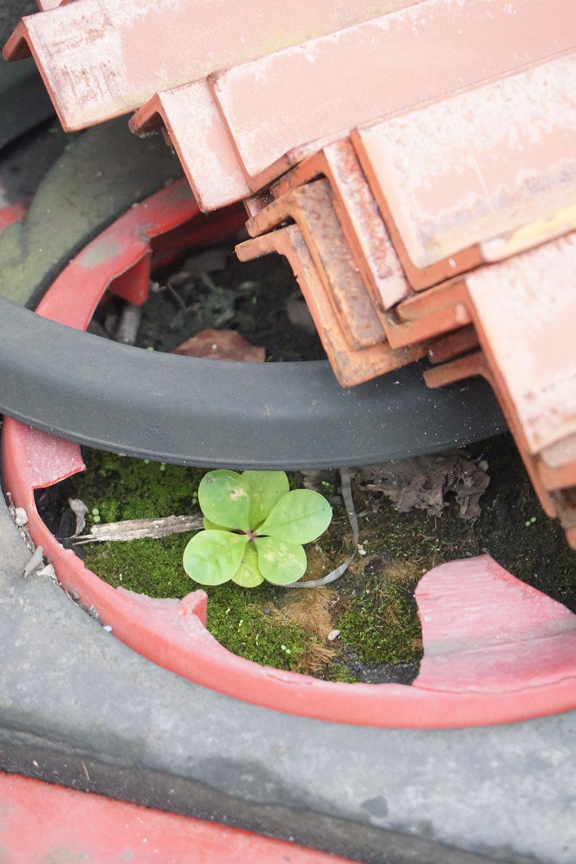 土台しか残っていないパイロンの下に一輪だけ生えていた植物。村田さんが「これもいいですね」と足を止めていた。なおツイッターでは「#がんばれパイロン」というハッシュタグでパイロンの写真を投稿する人も多い。