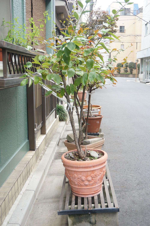 こちらも板を渡した上に植物を置き、転倒防止のために木の幹をヒモで柵に結びつけていた路上園芸。