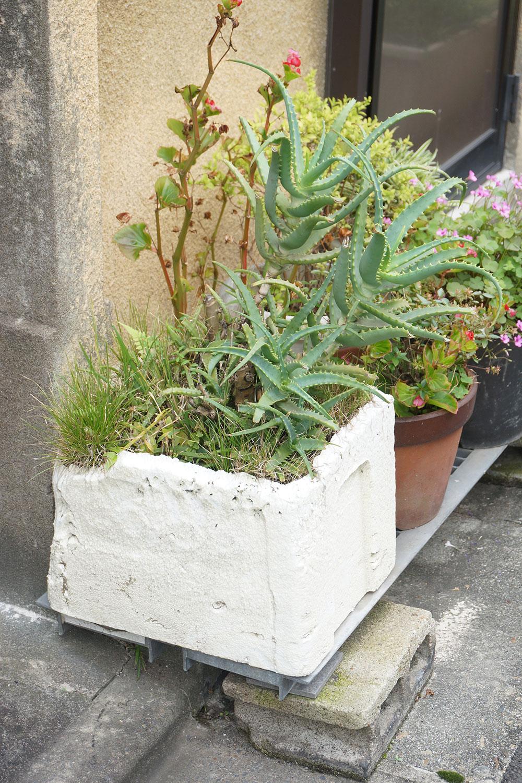 トロ箱に植えられたアロエ。「他の草は自然に生えてきたものかもしれませんね」と村田さん。