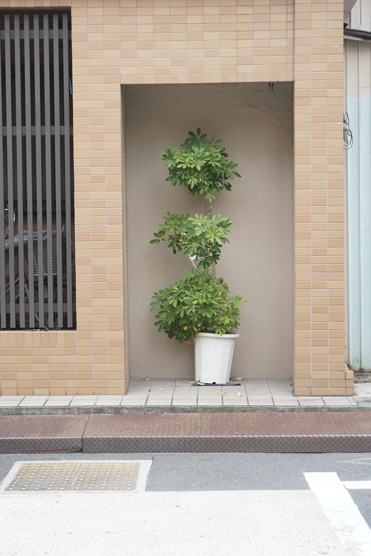 建物の壁が一部だけ窪んだ空間に配置された植木鉢。もともとは自販機でも置かれていたのだろうか。こちらも展示された作品のような趣がある。