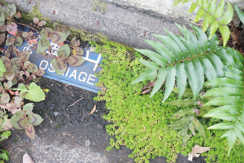 壁から剥がれ落ちた街区表示板がセダムに飲み込まれている。「人間のいない文明なき後の世界みたい……」と村田さん。