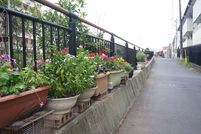 川沿いが個人宅の植木鉢置き場になっているエリアもあった。半ば自治体の公認なのかも?