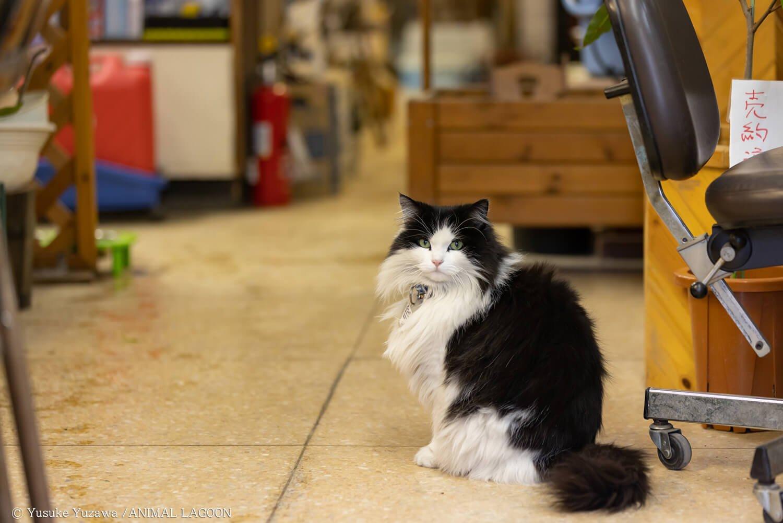「おかしな奴が来たぞ」と言わんばかりの表情でこちらを見つめる猫さん。驚かせてごめんよ。