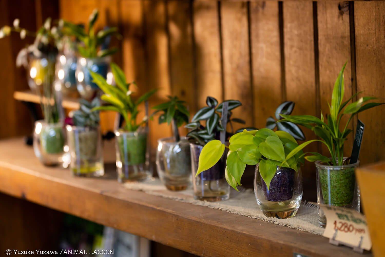 小さな観葉植物もおしゃれですね。