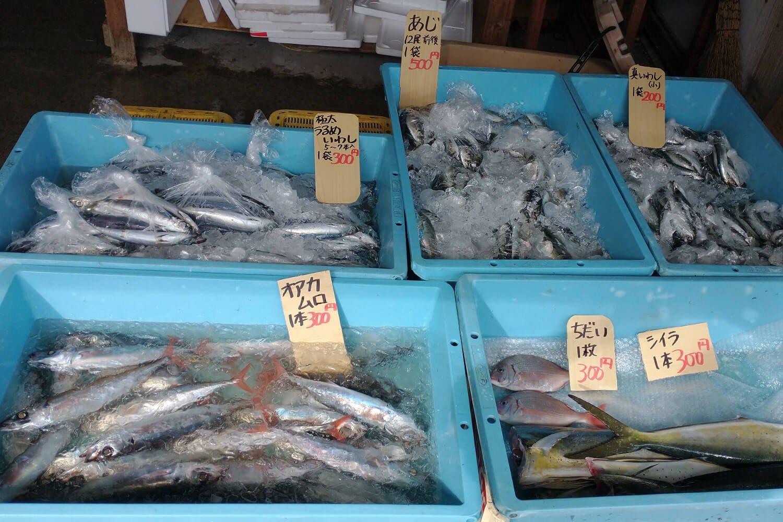 捕れたて鮮魚がお値打ち価格で手に入る(写真提供:真鶴町漁協)。