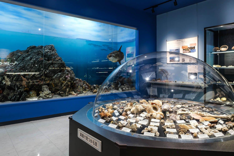 バラエティ豊かな貝の造形や色の違いが見る者をたちまち魅了する。