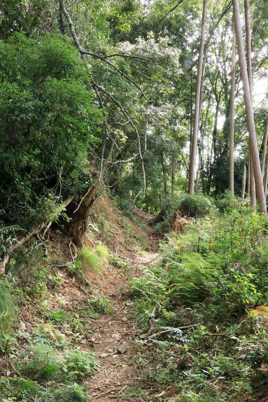 明智越の登山口から伸びる堀底道。