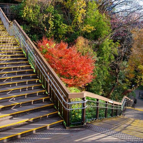 絶景が楽しめる23区内の階段10選!~Beauty階段で健康さんぽ~