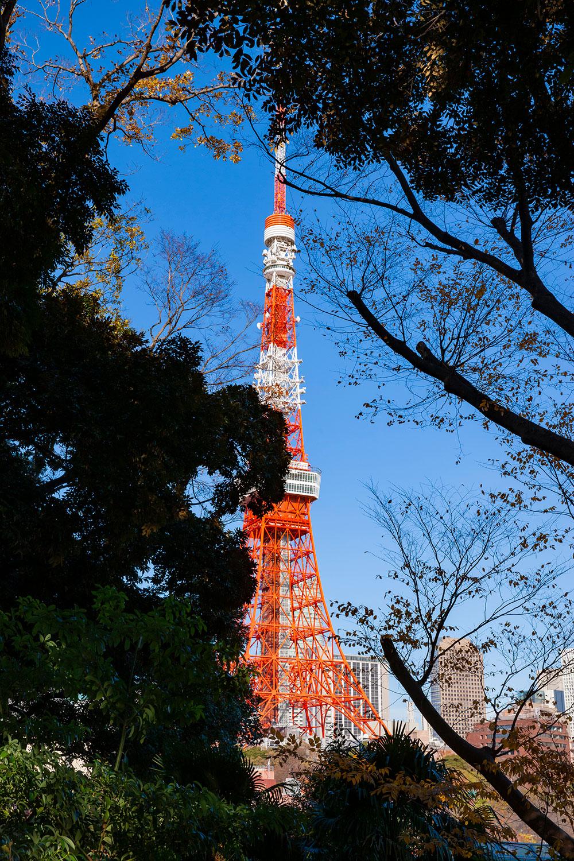木々が一部視界を遮るが、落葉する冬はよりきれいに東京タワーが見える。